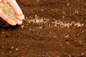 Seeds on fertile soil — Stock Photo