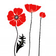 Stylish red and black Poppies on white background - Stock Photo