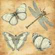 Stock Photo: Old Butterfly collection