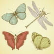 Vintage Butterfly collection - Stock Photo