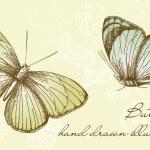 Vintage Butterfly Set — Stock Photo
