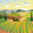Summer solar rural landscape with a sunset, vineyard and mountains — Stock Photo