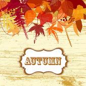 Fondo las hojas de otoño — Foto de Stock