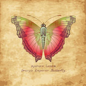Hand drawn butterfly in vintage style — Stock Photo