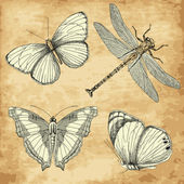 Old Butterfly collection — Stock Photo