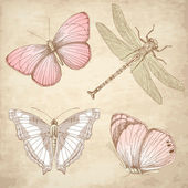 Vintage Butterfly collection — Stock Photo