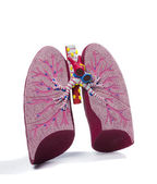 Anatomic model of a lung — Stock Photo
