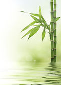 Lucky bamboo design border — Stock Photo