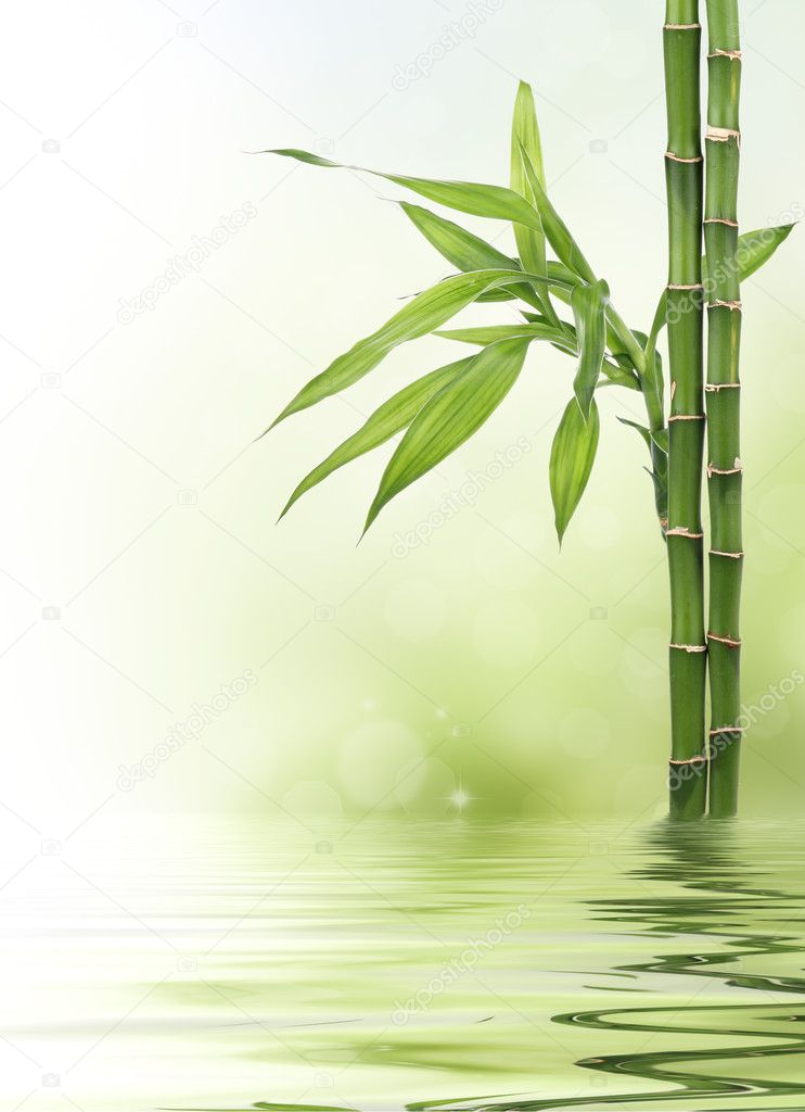 lucky bamboo design border � stock photo 169 pics4ads 7680531