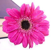 Květina v uzavřené knize — Stock fotografie