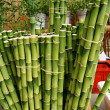 Fresh bamboo — Stock Photo