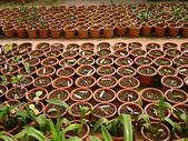 Plant seedlings in the greenhouse for sale — Stock Photo