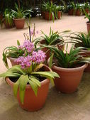 Flower seedlings in the greenhouse for sale — Stock Photo