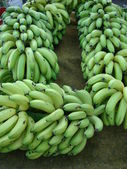 A large bunch of green bananas on a plantation — Stock Photo