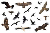 Bird Collection — Stock Photo