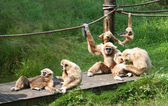 Joyful Monkey Family — Stock Photo