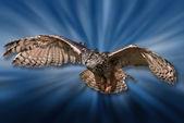 Bird of Pray Attack! — Stock Photo