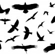 Bird Silhouette Collection — Stock Photo