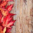 Autumn background — Foto de stock #7505440