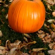 Pumpkin — Stock Photo #7505725