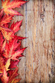 Autumn background — Stock fotografie