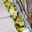 Clogged gutter - Stock Photo
