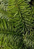 绿色圣诞背景 — 图库照片