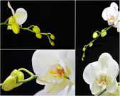 Orchid. — Foto Stock
