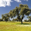 Spring in Extremadura. — Stock Photo