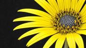 Yellow flower. — Stock Photo