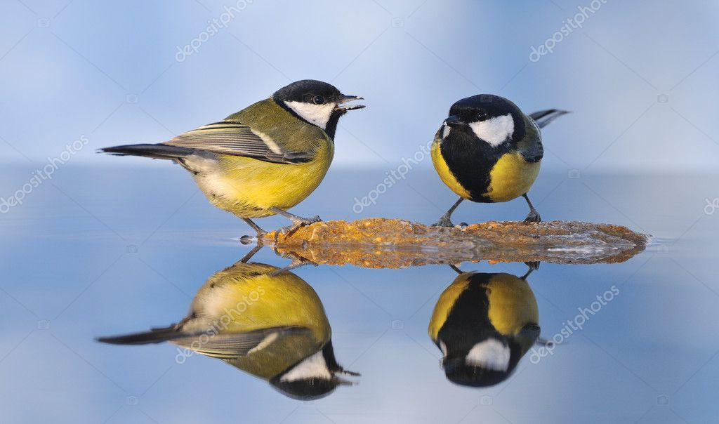 Bird reflected in the water. — Stock Photo #7510272