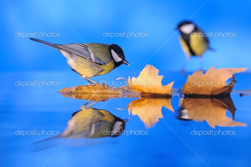 Bird reflected in the water. — Stock Photo #7510290