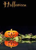 Halloween Pumpkin on a black background. — Stock Photo