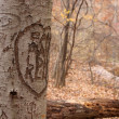 Tree Carvings II — Stock Photo #7608203