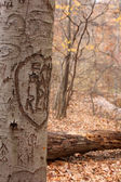 Tree Carvings II — Stock Photo