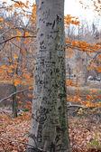 Tree Carvings — Stock Photo