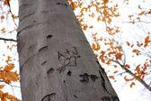 Love Tree Carving II — Stock Photo