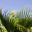 Palm leaves in the wind — Stock Photo
