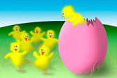 Easter chicks — Stock Photo