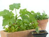 Indoor gardening — Stock Photo