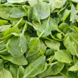 Perfect baby spinach greens — Stock Photo #7524878