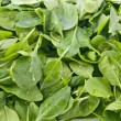 Perfect baby spinach greens — Stock Photo