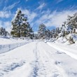 Winter forest road — Stock Photo