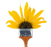 Sunflower paintbrush — Stock Photo