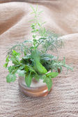 Herbs in a mug — Stock Photo