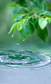 Water drop and wet leaves — Stock Photo