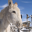 Winter Donkey - Stock Photo