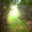 Sunrise forest path — Stock Photo