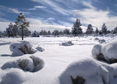 Winterlandschaft — Stockfoto