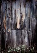 コケの古い木製の背景 — ストック写真
